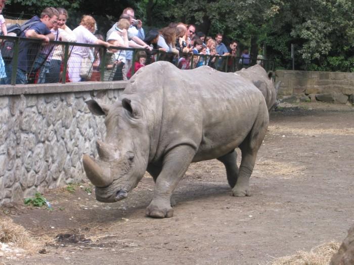 Rhino - Perhaps I shouldnt be in here