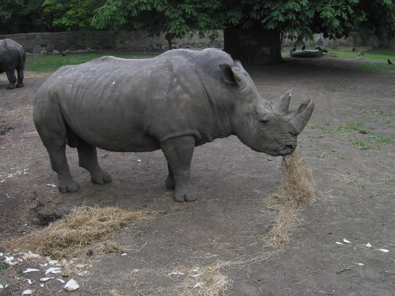 Rhino - I like food